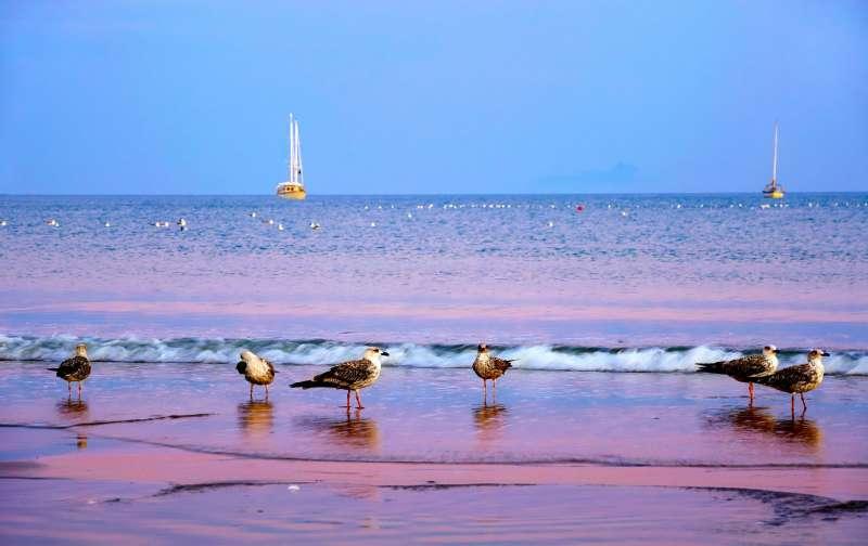 海洋與沙灘要回復昔日清純模樣,我們必須真誠檢討目前處理垃圾的方式,可不是丟到垃圾桶就沒事了。