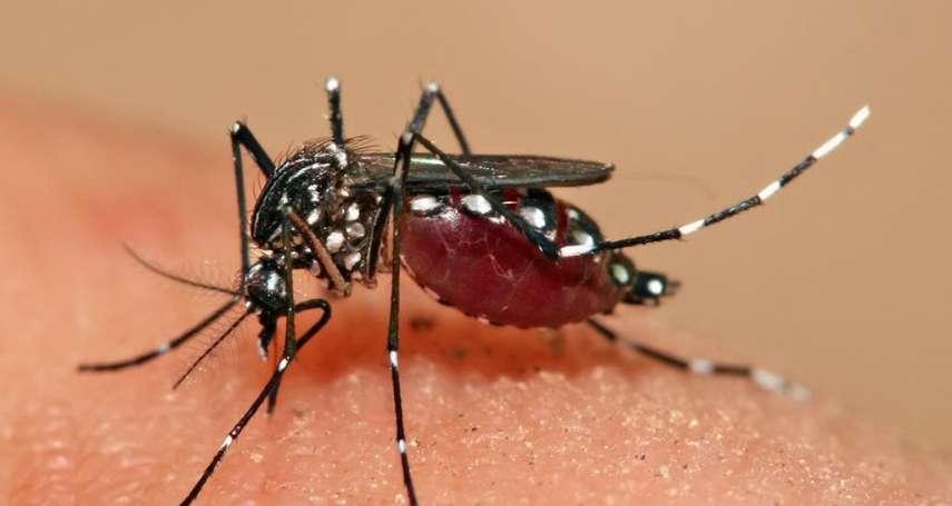 美國佛州將釋放7.5億隻「基改蚊」,消滅登革熱病媒蚊!生態實驗挨轟:失敗的話怎麼辦?