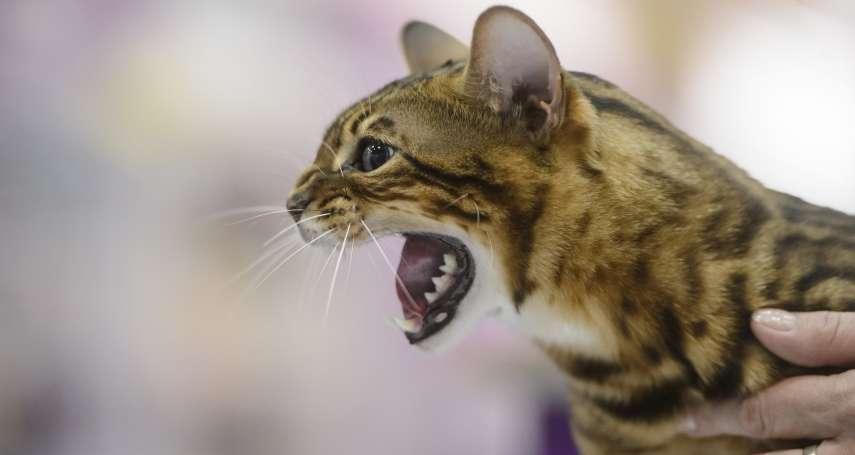 貓奴不是今天才有》發現絲路上最早的家貓!中亞地區千年以前就蓄養 見證遊牧與都會文化交流
