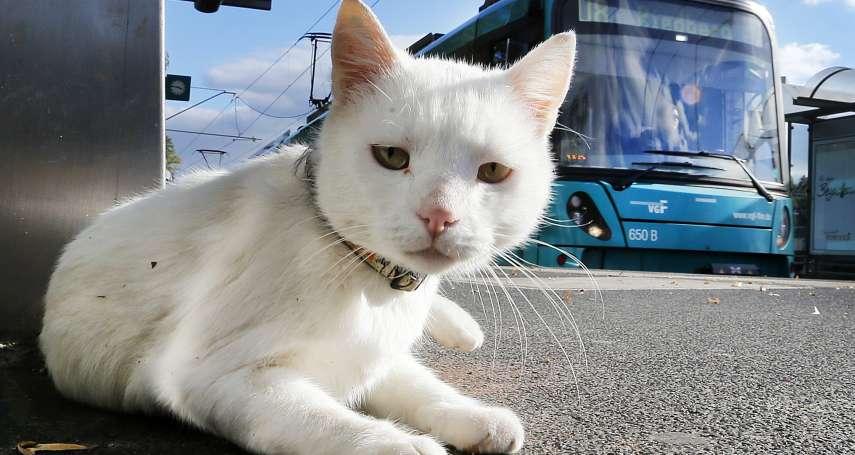伊斯坦堡與貓的親密歷史》無視教皇「滅貓令」 拜占庭帝國成為喵星人天堂