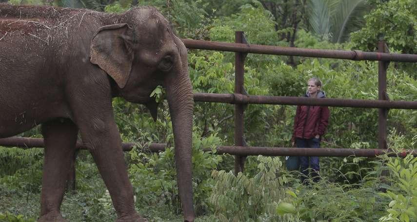 52歲亞洲象擺脫馬戲團痛苦經歷 抵達巴西保護區展開自由新生活