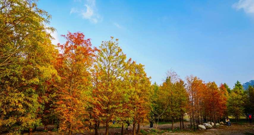 美得彷彿誤闖仙境!全台5處值得一訪的「落羽松」森林,隨便拍都是最夢幻絕景