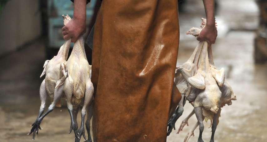 全球首批H5N8禽流感病毒傳人病例! 俄羅斯已有7人染疫