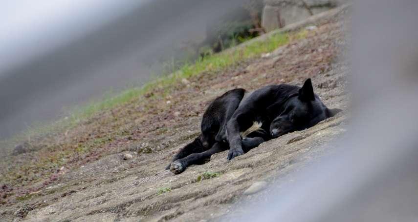 他平日脾氣溫和,看到落難小狗竟惡毒地出手欺凌…心理師分析:虐待動物的人常生於這種家庭