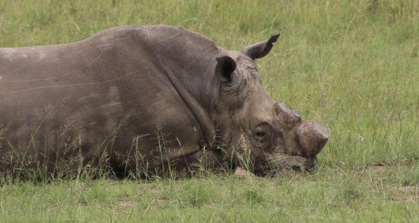 動物的復仇》南非犀牛盜獵者遭大象活活踩死 遺體被獅群吃個精光「只剩下頭蓋骨」