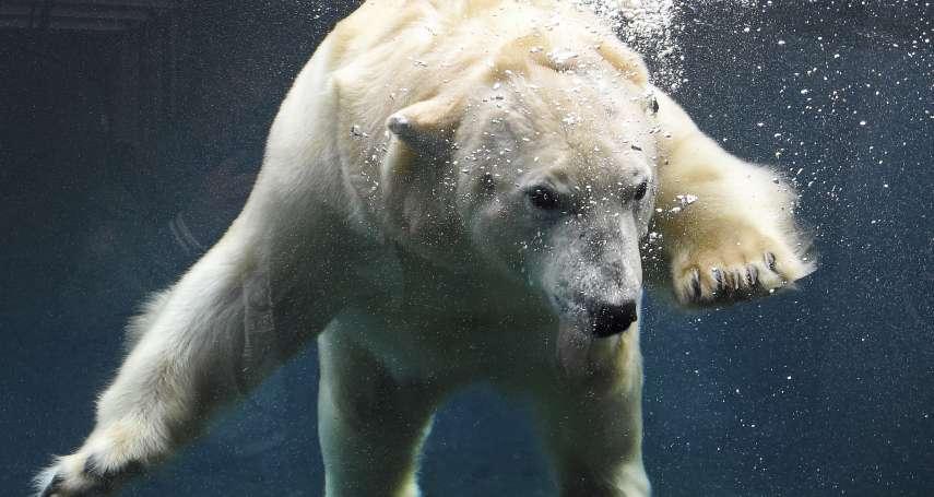 來自冰天雪地的郵件》挪威科學家每天收到北極熊「來信」:雖然失去棲息地,但牠們樂觀堅強……