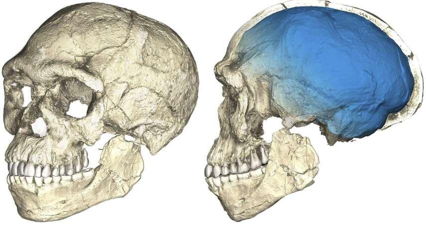 氣候越溫暖、體型越矮小!最新研究:過去100萬年的氣候變遷改變人類體型