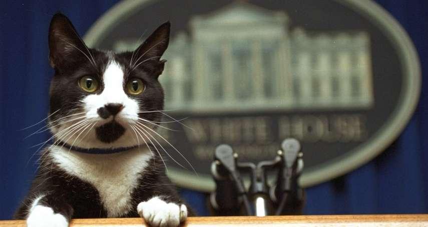 動物實驗餵貓吃死貓肉!被踢爆30年殺害3000隻貓,美國農業部宣布停止活貓實驗