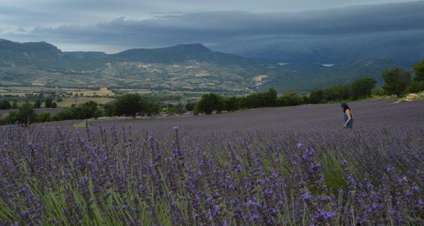為何薰衣草對法國人來說不浪漫?調香師帶你漫遊普羅旺斯花田,上一堂南法香水課!