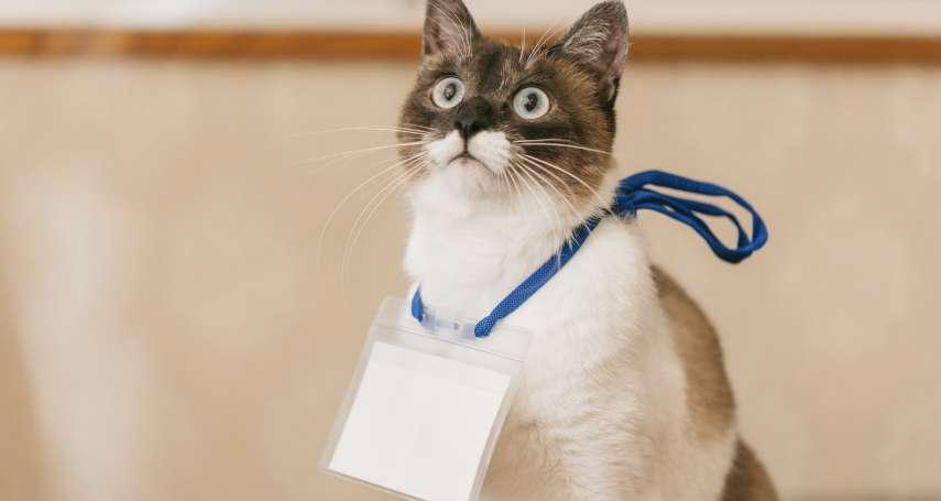 帶寵物到公司上班,適合嗎?正方喊紓壓、反方怕過敏,多家企業跟風引爆激烈攻防…