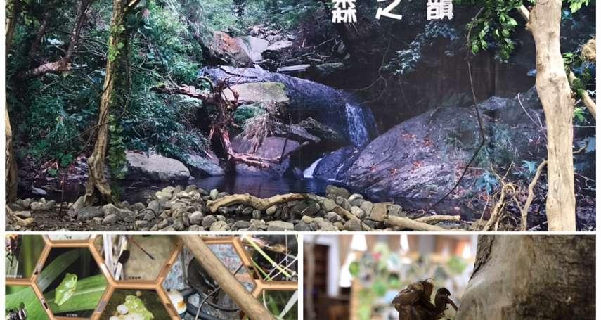 屏東春日鄉生物多樣性特展登場 一窺生命的奧妙與驚奇