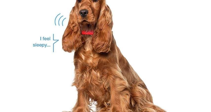 毛小孩翻譯蒟蒻!科技項圈讓你一窺狗狗心內話,加上「這些」厲害功能簡直超實用!