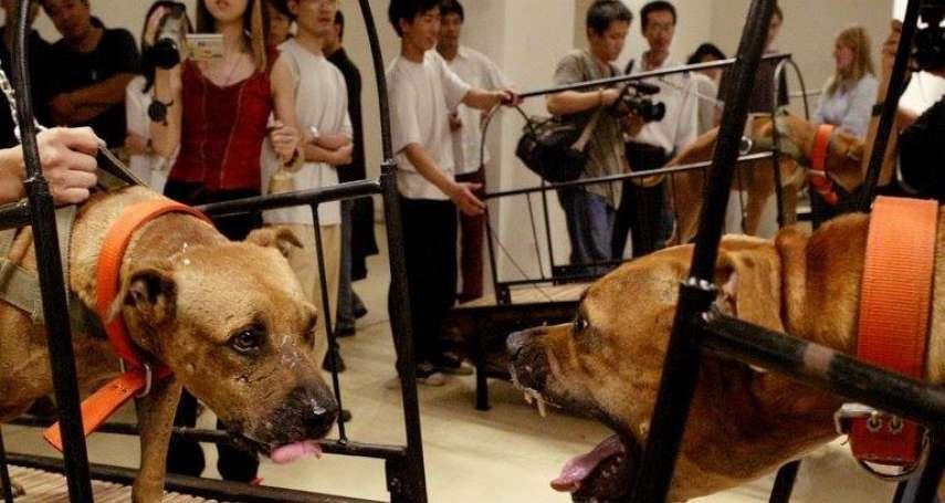 放昆蟲、爬蟲自相殘殺、跑步機上鬥狗…中國藝術家遭民眾怒轟虐待動物,館方急撤展
