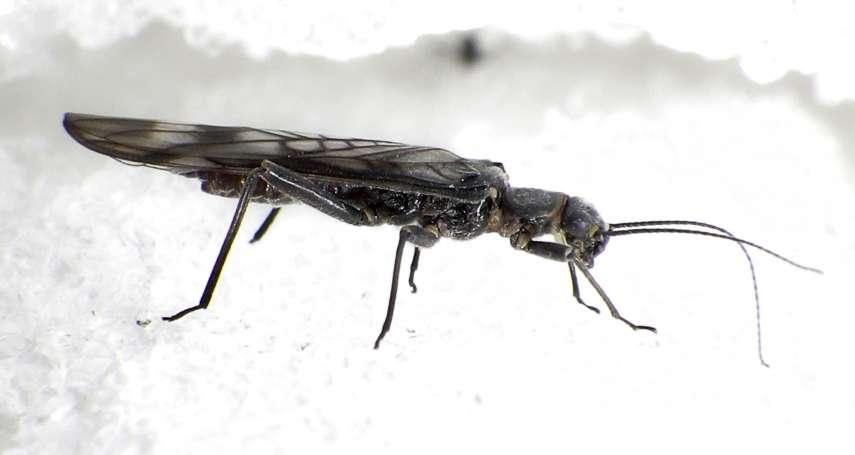 人類其實是長的很像蟲子的「四維生物」:《天才在左 瘋子在右》選摘(1)