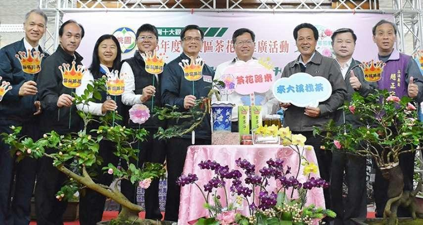 歡迎來找「茶」 大溪茶花節12月30日登場