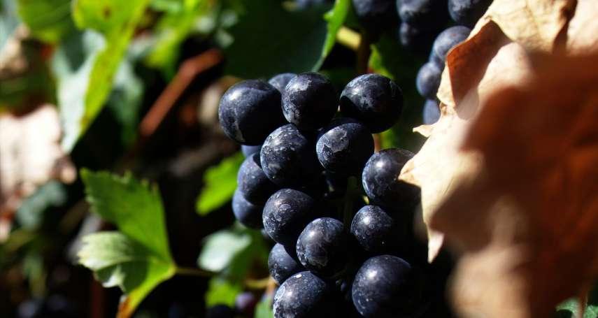 減肥要吃綠葡萄、貧血要吃黑葡萄?大錯特錯!營養師揭秘4種葡萄怎麼吃最正確