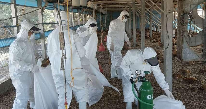 屏東一土雞場感染H5N2禽流感 撲殺上萬隻土雞