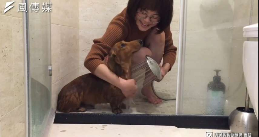 【影音】你家的汪星人也害怕洗澡嗎?跟著動物訓練師學會這6招,讓你幫毛小孩洗澡不再狼狽不堪!