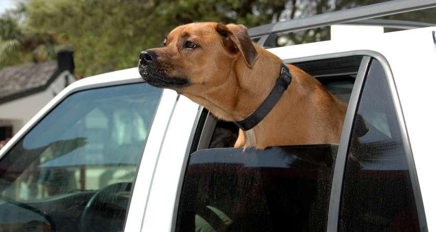 每次帶寵物出遊都好忙亂?這7大實用攻略能幫大忙!坐車也不怕毛孩驚慌受傷!