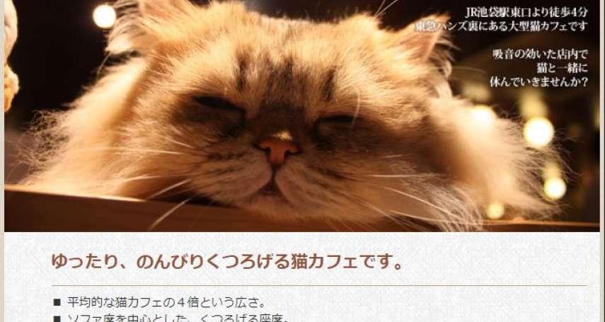 貓奴們、朝拜吧!2月22日就是要「喵喵喵」,日本歡慶喵喵節