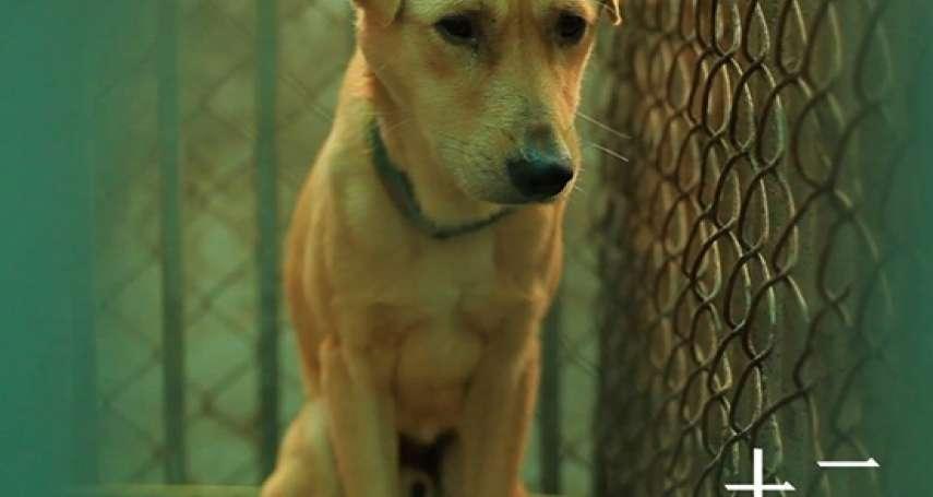 中國狗權抬頭?「最嚴養狗令」今上路:虐狗、遺棄、不帶牽繩、牽繩太長都要罰