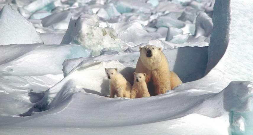 全球暖化可不是只有北極熊遭殃!保育團體最新報告:8萬個動植物恐在數十年內絕種