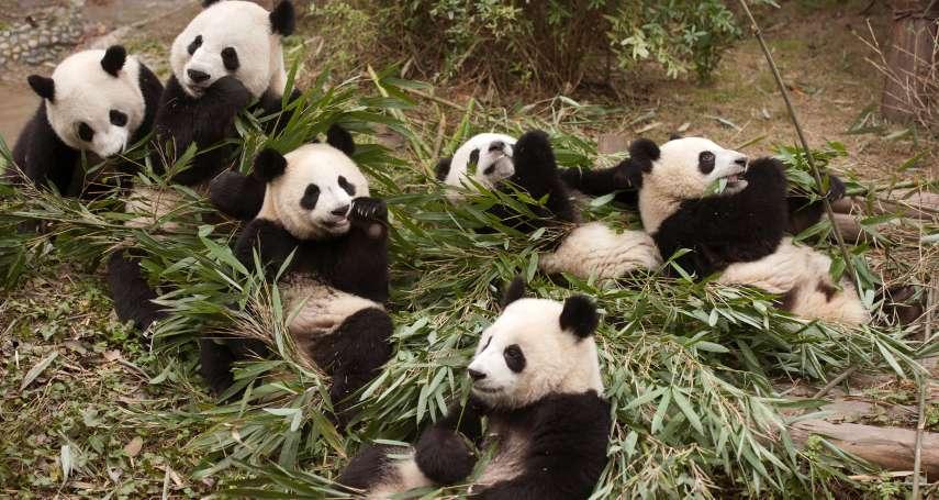 動物外交》可愛就是軟實力!除了中國貓熊,這些國家也有招牌「動物大使」