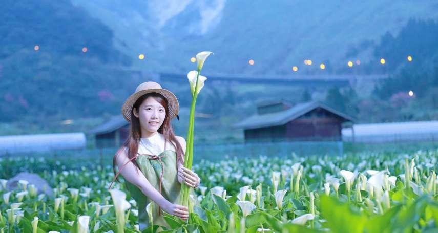 抓住春天的尾巴!盤點全台5大賞花秘境,就算不去日本也能享受花海