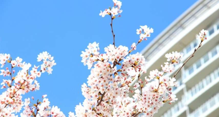 堂本剛種下的櫻花樹,成為連結所有粉絲的神木…「剛櫻」背後的超感人故事