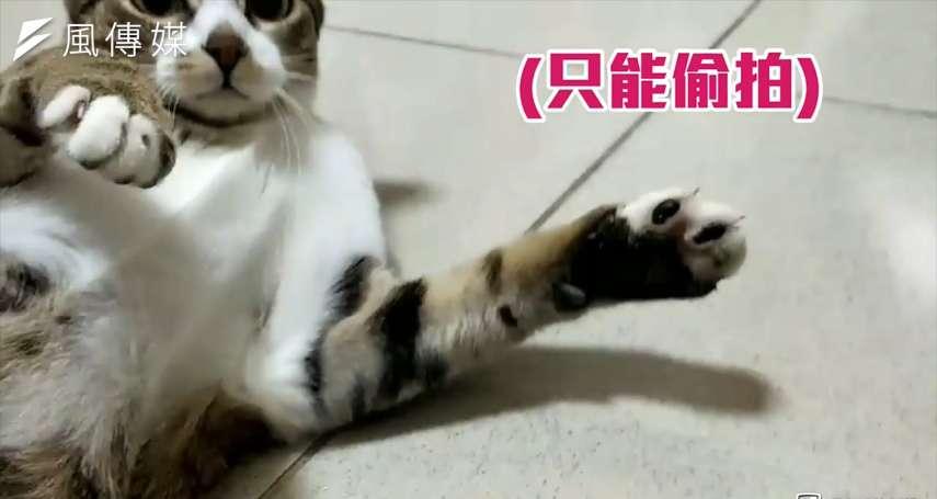 【影音】可惡想摸!你也受不了「肉球の誘惑」?貓咪療癒肉墊大解密!