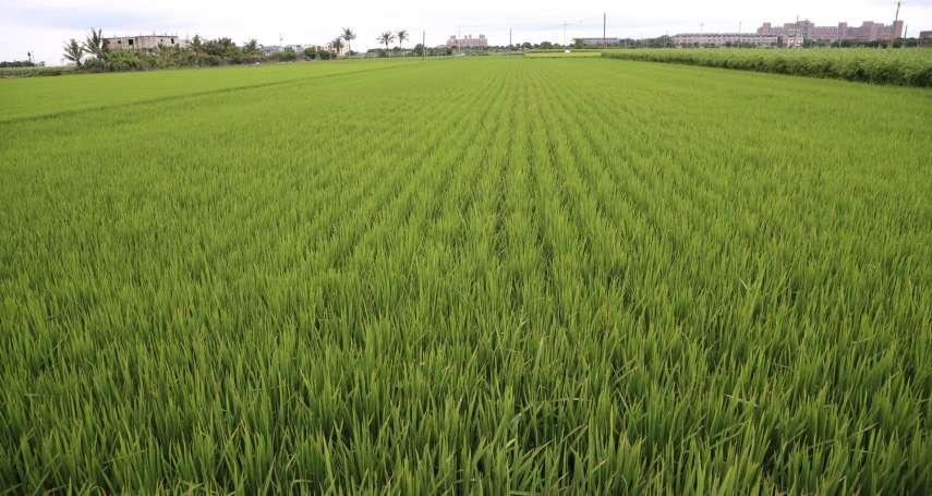 杜宇觀點:台灣稻米政策應全面革新