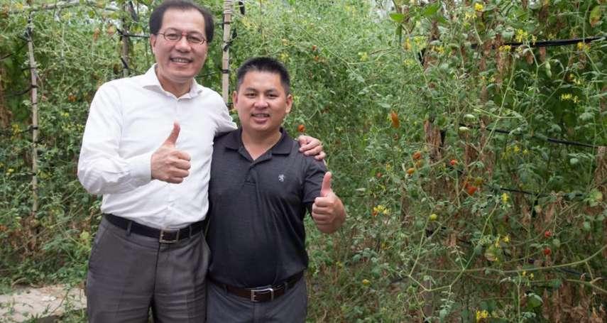 牛奶小蕃茄行銷國際 多國相繼抵嘉義果園參訪