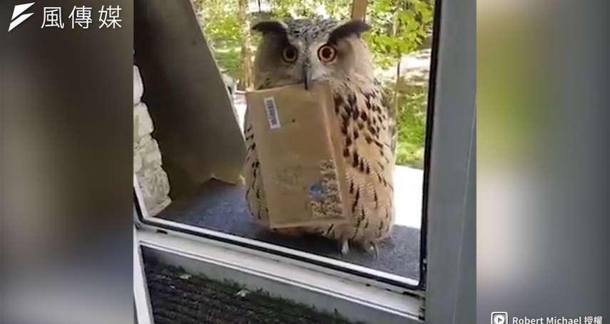 【影音】霍格華茲的入學通知書?!貓頭鷹叼著郵件呆萌站窗外,萌翻網友!