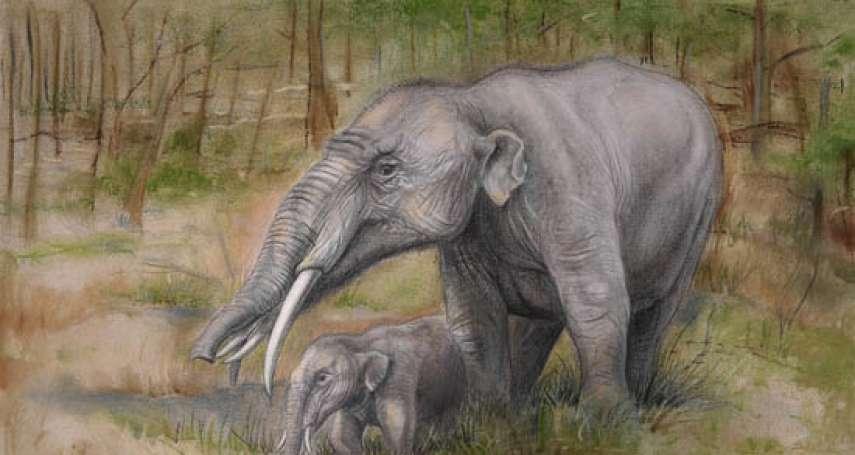 中國科學家揭秘世界上最早的草食性象類「施泰因海姆嵌齒象」