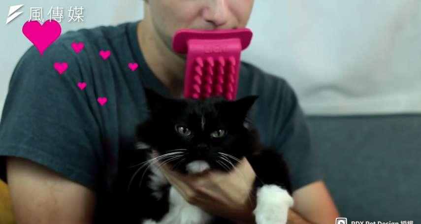 【影音】你曾渴望幫你家的貓舔毛嗎?貓界舔毛神器誕生!滿足貓奴慾望!