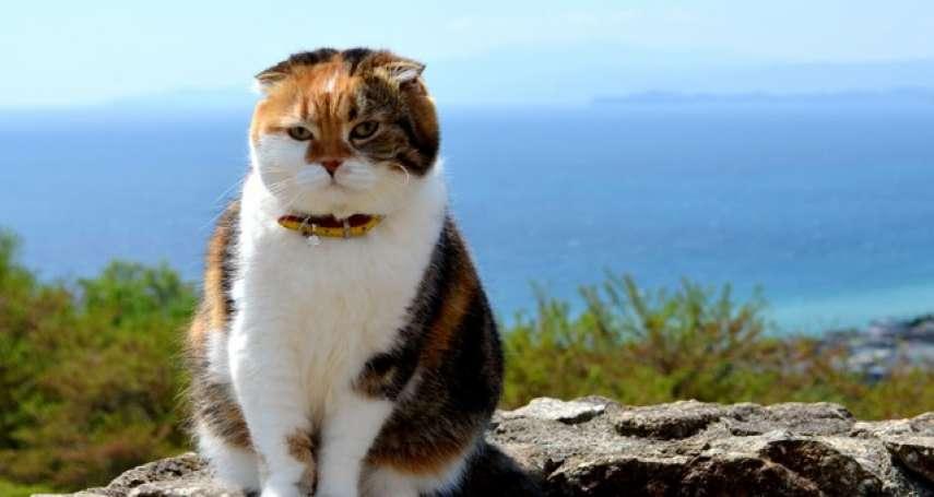 山丘上的三色貓 持續爬山7年SNS掀話題