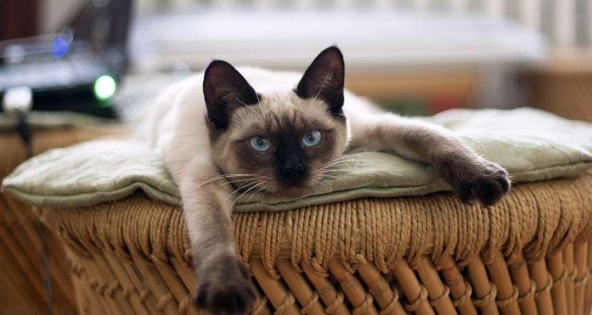 只有狗狗會得心絲蟲嗎?獸醫嚴正警告:貓咪也會,且一旦感染死亡率近百分之百