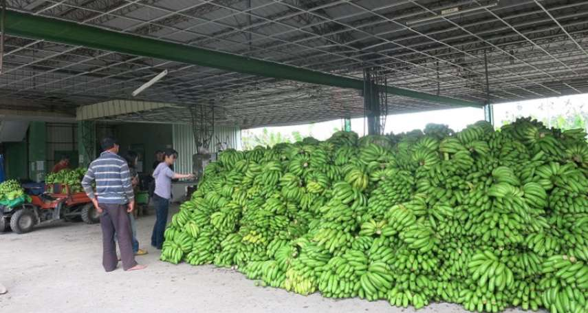 王繼維觀點:每年看戲吃香蕉會不會感覺厭煩?
