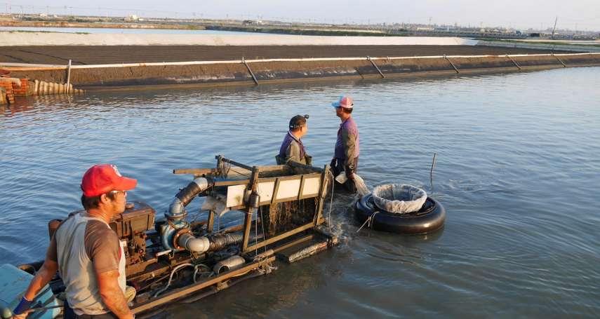 克服文蛤養殖逆境有方法!魚塭水質「多益菌」成指標