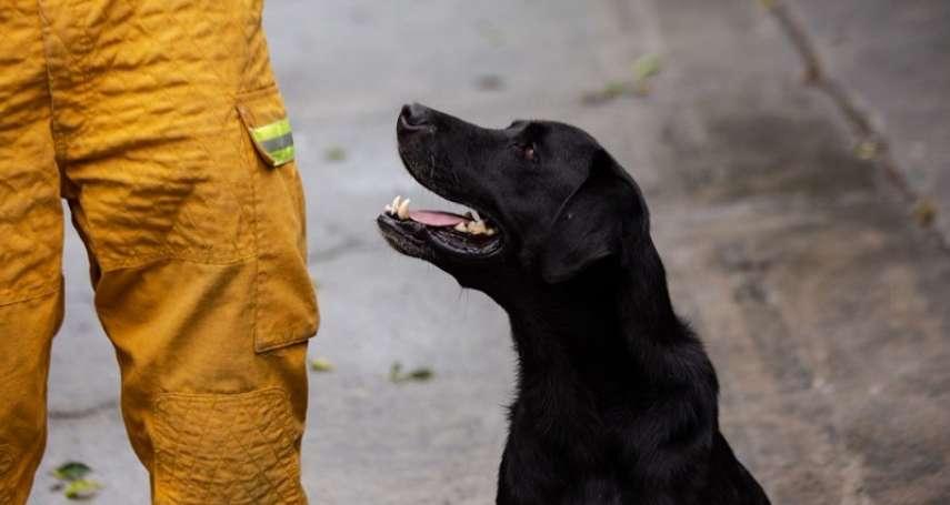 因為喜愛著人,所以搜救犬一到災害現場就能展開搜救! 屏東縣政府消防局特搜大隊搜救犬訓練大公開!