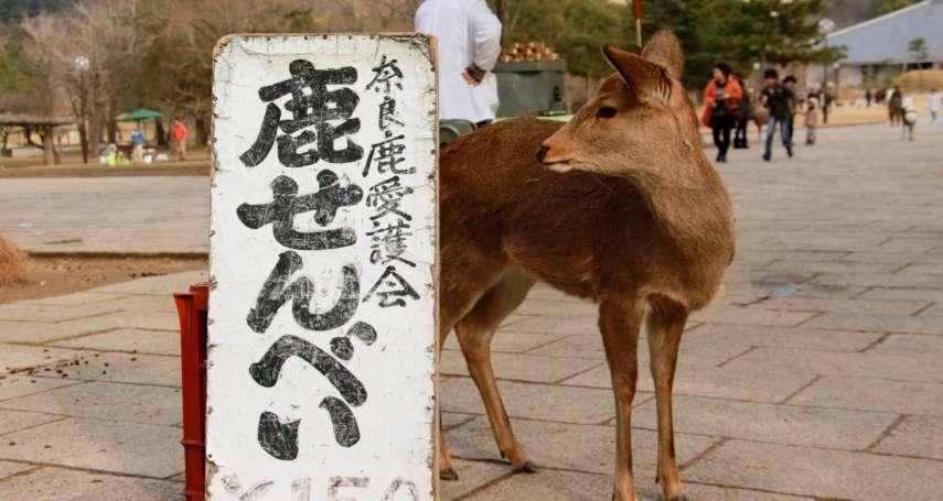 到奈良旅行,總開心地去餵食鹿群?其實奈良公園的鹿有超嚴重健康隱憂…