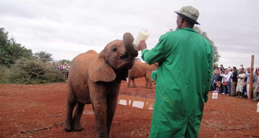 【謝幸吟專欄】人類覬覦象牙的貪婪之心,造成野生象的生存危機!她寫下在肯亞孤兒象之家的所見所聞