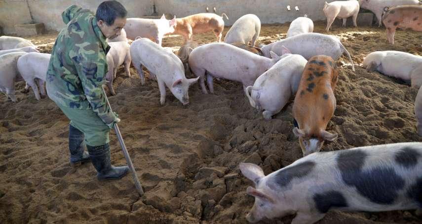 中國來的「非洲豬瘟」到底多可怕?呂秋遠:20年前「口蹄疫之亂」讓台灣付出這些慘痛代價