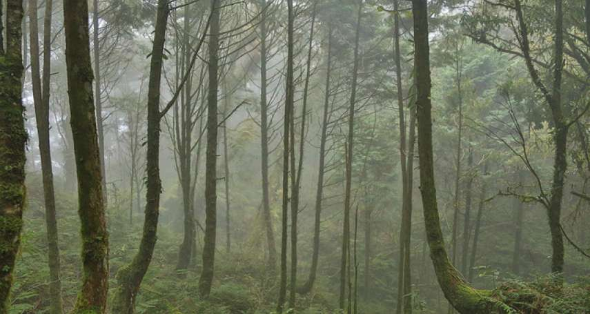 賈忠偉觀點:伐「檜」種「杉」——日據時期錯誤的造林政策