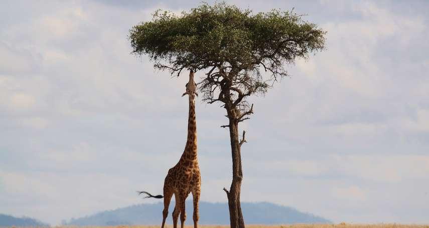 非洲旅遊》還在怕貧窮、骯髒、治安差?破解10大「過時迷思」,絕對讓你從此大改觀!