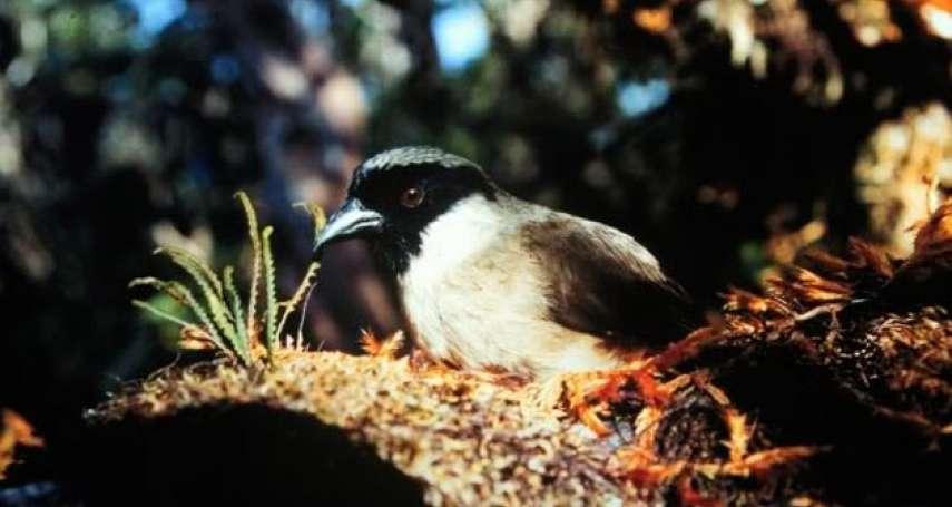 《里約大冒險》主角「阿藍」已在野外滅絕! 除了斯皮克斯金剛鸚鵡……還有7種珍稀鳥類也可能悄然絕種