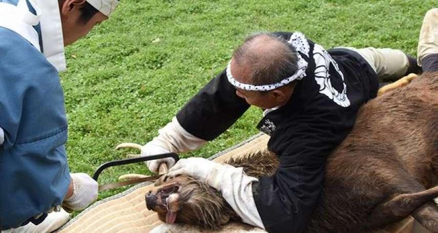 歷史悠久的奈良秋季傳統活動「鋸鹿角」