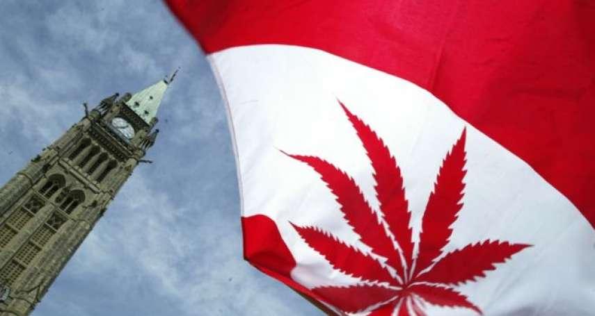 在楓葉國紅翻天的大麻葉:當娛樂用大麻合法化,誰是最大贏家與輸家?