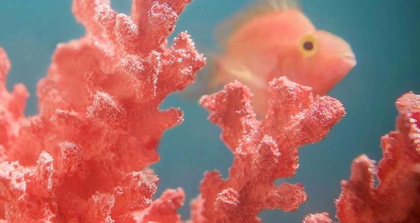 「活力溫暖,在變動的環境中帶來生機」明年2019年的代表色:活珊瑚橘