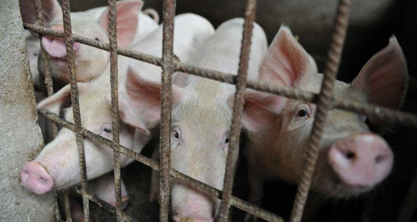 非洲豬瘟到底是怎麼在中國全面擴散的?從疫情爆發地點的神祕關聯,發現案情不單純…